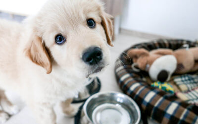 The Dos and Don'ts of Buying a Puppy